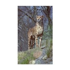 Cheetah Rectangle Decal