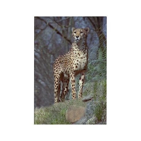 Cheetah Rectangle Magnet (10 pack)