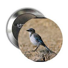 """Bluejay 2.25"""" Button (10 pack)"""