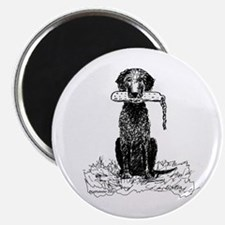 Curly-Coated Retriever with Bumper Magnet