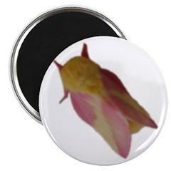 pink moth 2.25
