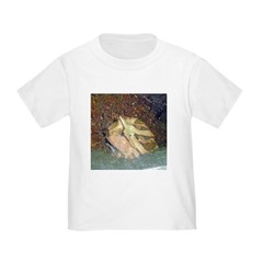 ornate horned frog T