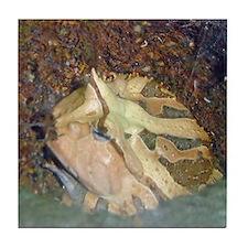 ornate horned frog Tile Coaster