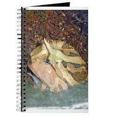 ornate horned frog Journal