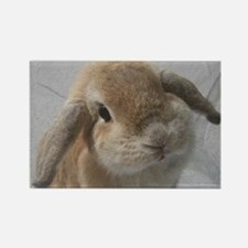 Bunny<br> Rectangle Magnet