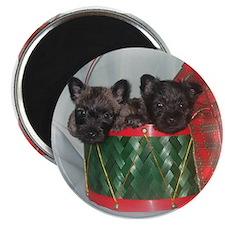 Little Drummer Cairn Pups Magnet