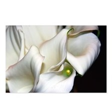 Calla Lilies Postcards (Package of 8)