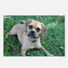 Puggle Dog Postcards (Package of 8)
