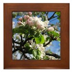 Apple Blossoms Framed Tile