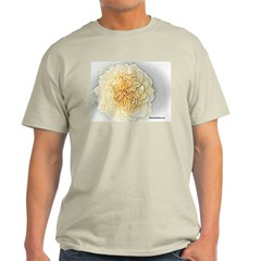 Old Yellow Rose 2 Ash Grey T-Shirt