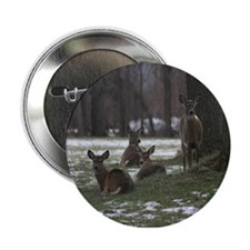 """White tailed Deer Photograph 2.25"""" Button"""