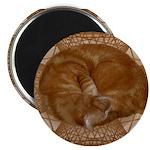 Cat's Cradle 2.25