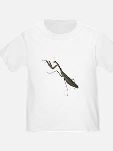 preying mantis T