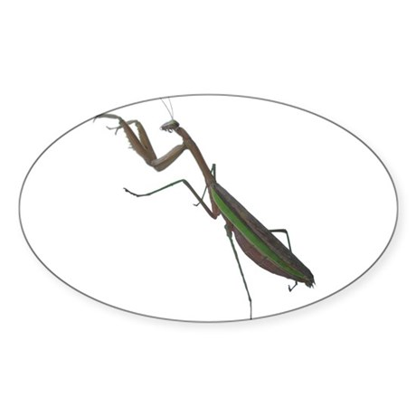 preying mantis Oval Sticker