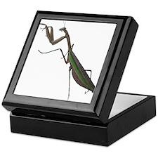 preying mantis Keepsake Box