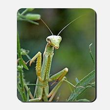 Mantis 475 Mousepad