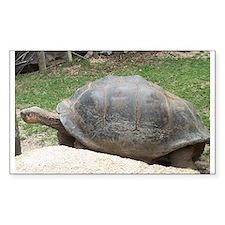 galapagos tortoise Rectangle Decal