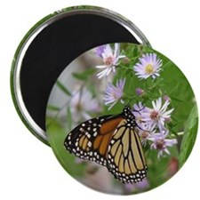 Monarch on Wild Asters Magnet
