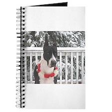 CMtl SnowGal2 Journal