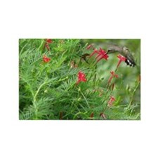 Ruby-throat and Cypress Vine Rectangle Magnet