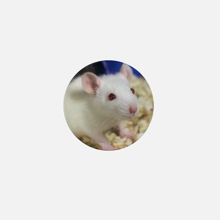 Cute Rats Mini Button
