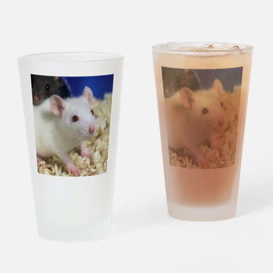Cute Rats Drinking Glass