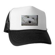 Coton de Tulear Hat