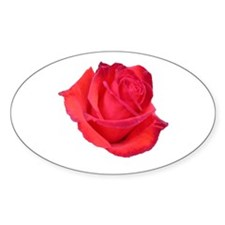 Camara (Rose) Oval Decal