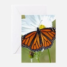 Monarch Butterfly on Cosmos Greeting Cards