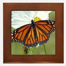 Monarch Butterfly on Cosmos Framed Tile