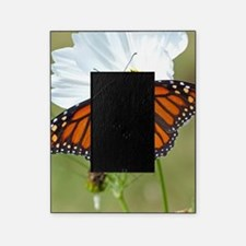 Monarch Butterfly on Cosmos Picture Frame