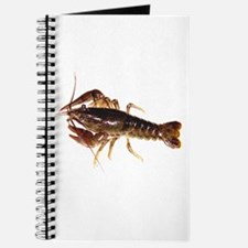 Crayfish 1 Journal