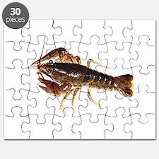 Crayfish 1 Puzzle