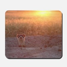 Black-Footed Ferret Mousepad