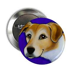 Beagle Jack Russell Mix 2.25