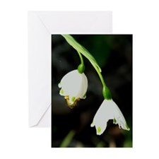 Early Bee pack of 10 greeting cards