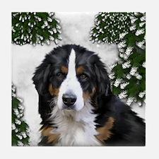 BERNESE MOUNTAIN DOG SNOW FOREST Tile Coaster