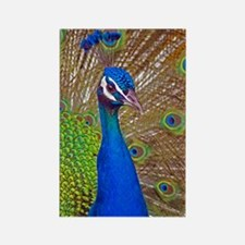 Peacock 1514 Rectangle Magnet