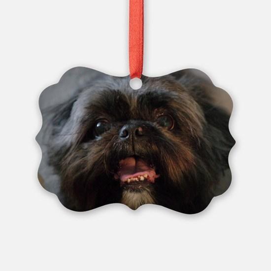Cute Black shih tzu Ornament