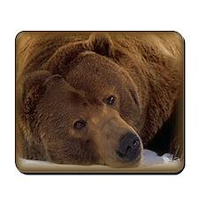 Kodiak Bear Mousepad