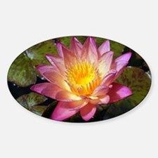 Lovely Pink Water Lily Decal