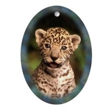 Jaguar Kitten Oval Ornament