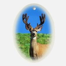 Buck Oval Ornament