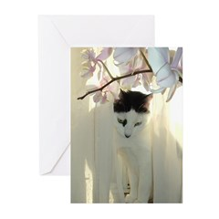 White and Black Cat Greeting Cards (Pk of 20)