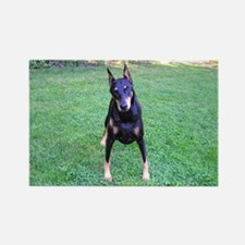 Doberman 4 Rectangle Magnet