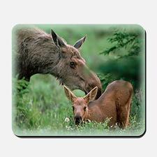 Moose and Calf Mousepad