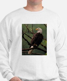 Majestic Bald Eagle Sweatshirt