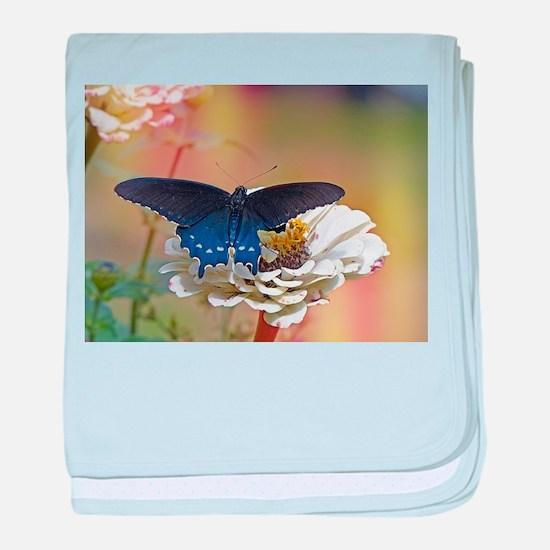 Spicebush Swallowtail baby blanket