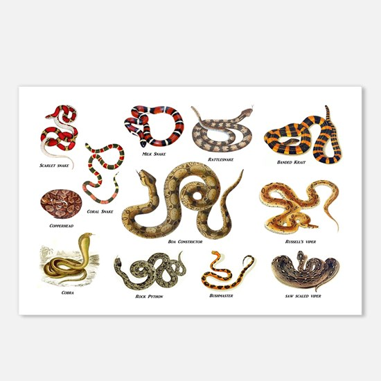 snakes Postcards (Package of 8)