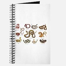 snakes Journal